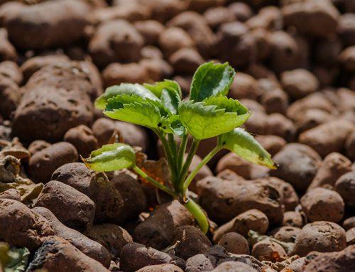 Hydroponic Grow Mediums
