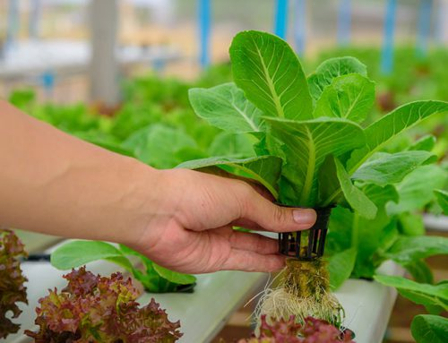 10 Reasons to grow with Hydroponics